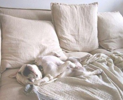 funny-pictures-dog-cute-nap