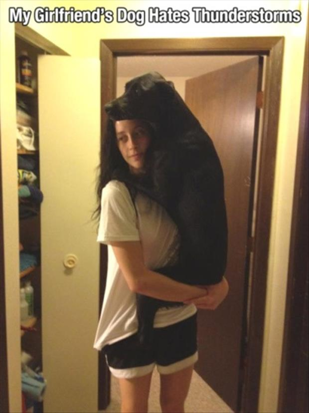 funny-pictures-dog-hates-thunderstorms