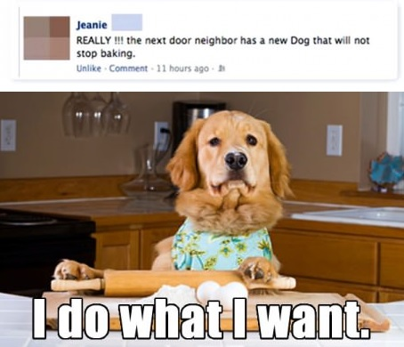 funny-pictures-dog-i-do-what-i-want
