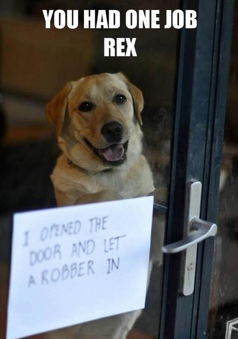 funny-pictures-dog-shame-had-one-job