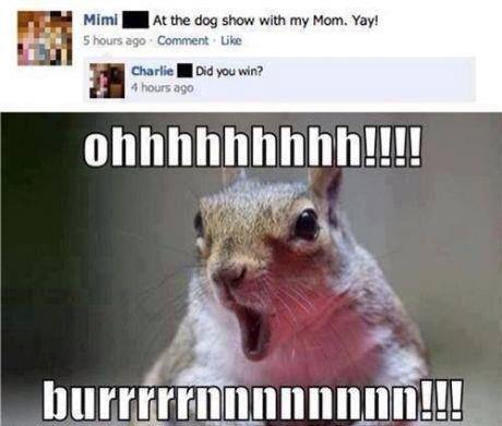 funny-pictures-facebook-comments-dog-show