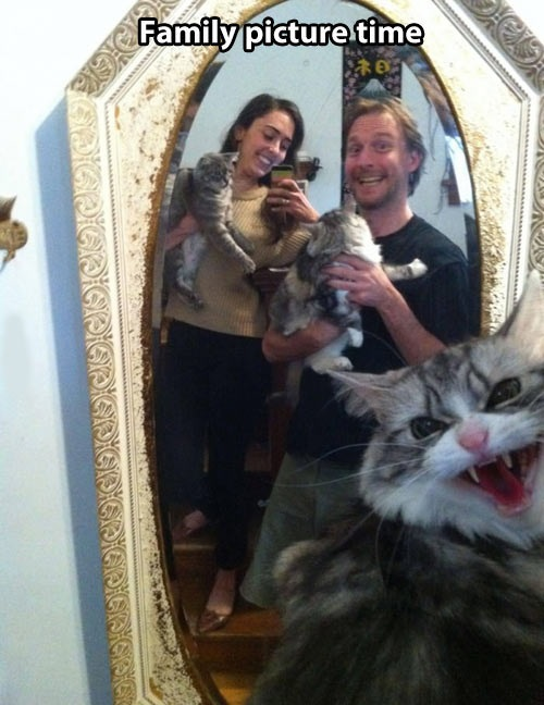 funny-pictures-family-pictures-cats