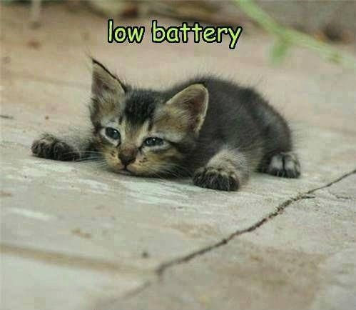 funny-pictures-kitten-low-battery