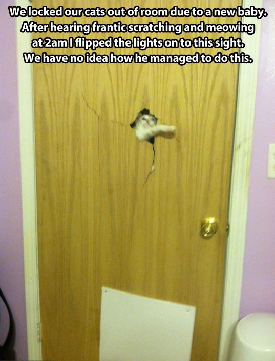 funny-pictures-locked-room-cat