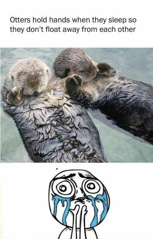 funny-pictures-otters-hold-hands-cute