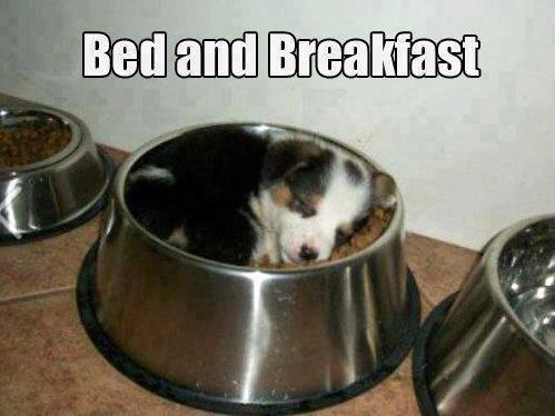funny-pictures-puppy-bed-and-beakfast