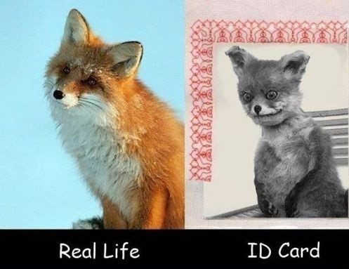 funny-pictures-real-life-id-card-photos-fox