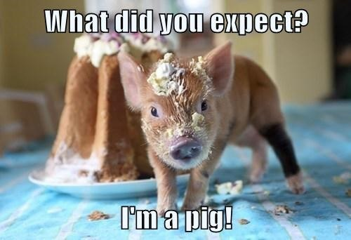 funny-pictures-what-did-you-expect-from-pig