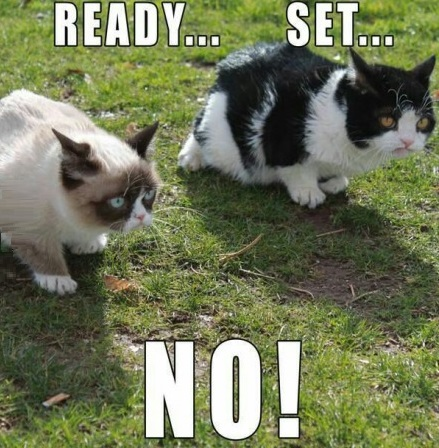 funny-picture-grumpy-cat-running