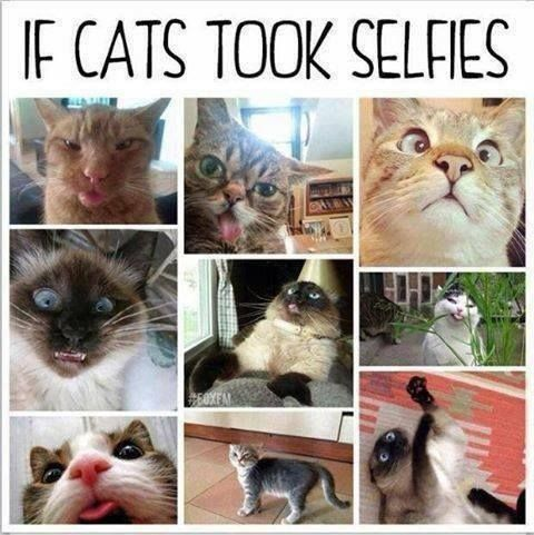funny-picture-if-cats-take-selfies
