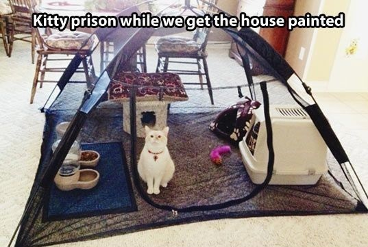 funny-picture-kitty-prison
