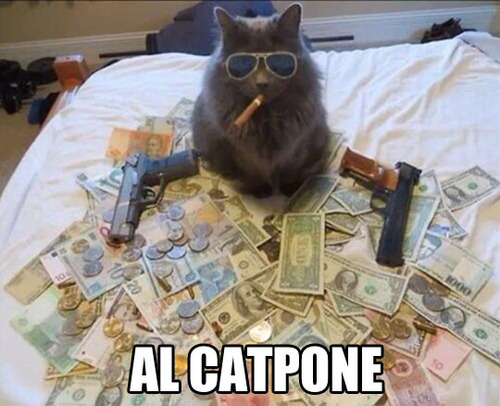 funny-pictures-alcapone-cat