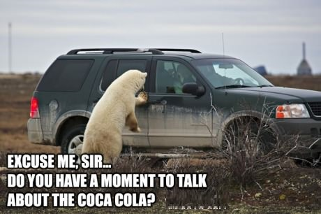 funny-pictures-bear-coca-cola
