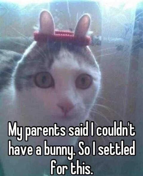 funny-pictures-bunny-cat