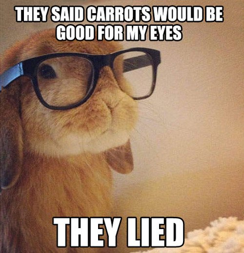 funny-pictures-bunny-hipster