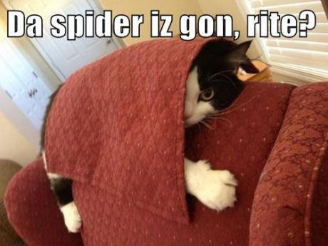 funny-pictures-cat-afraid-of-spider