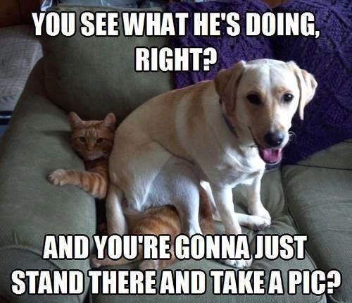 funny-pictures-cat-dog-take-a-pic