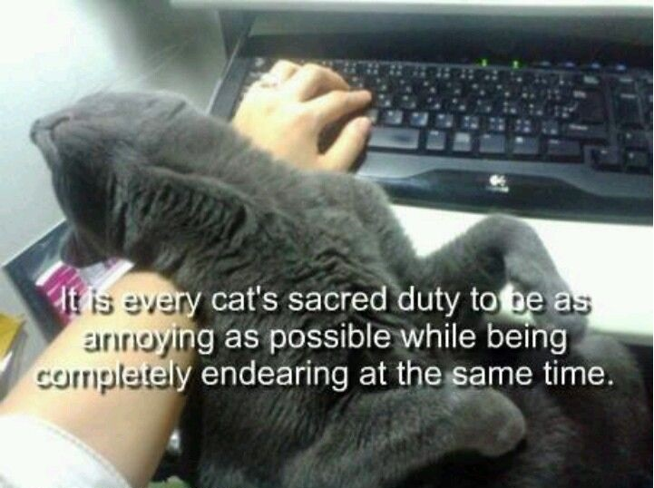 funny-pictures-cat-ennoying-endearing