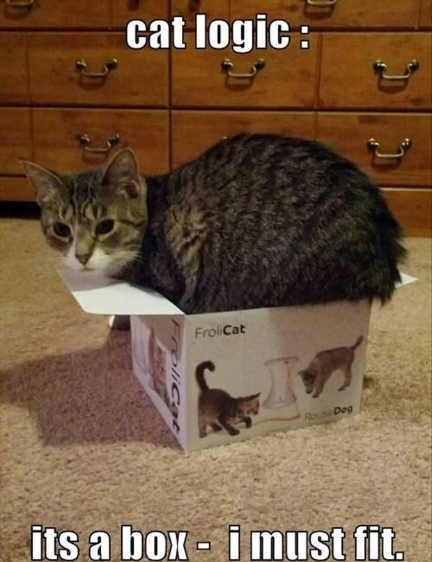 funny-pictures-cats-logic-box