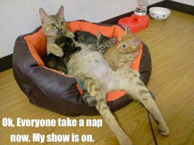 funny-pictures-cats-take-a-nap