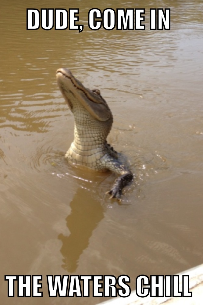 funny-pictures-crocodile-water
