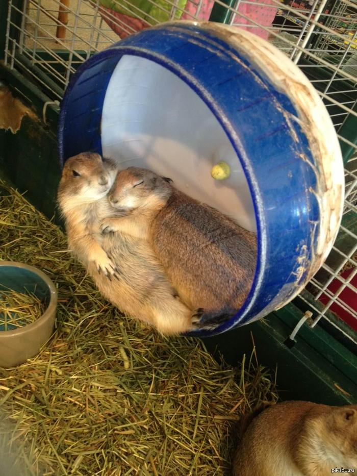 funny-pictures-cute-sleeping-together