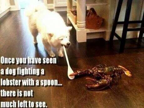 funny-pictures-dog-fighting-lobster