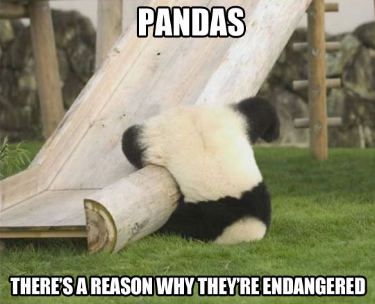 funny-pictures-endangered-pandas