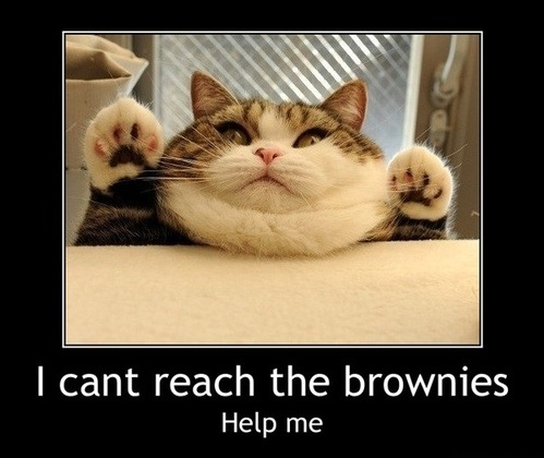 funny-pictures-fat-cat-brownies