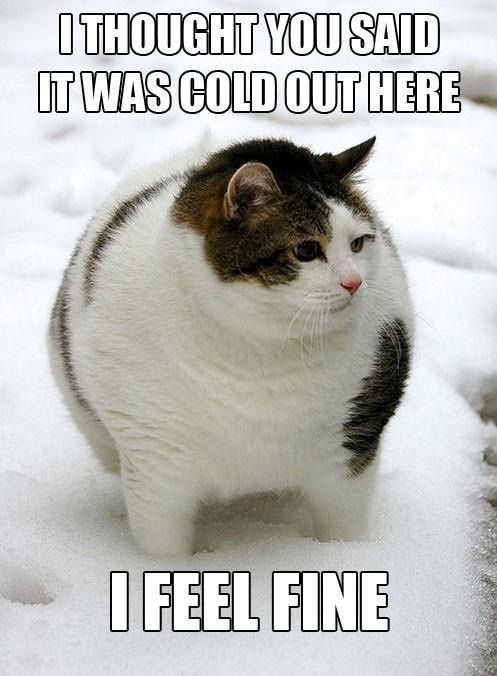 funny-pictures-fat-cat-feel-fine