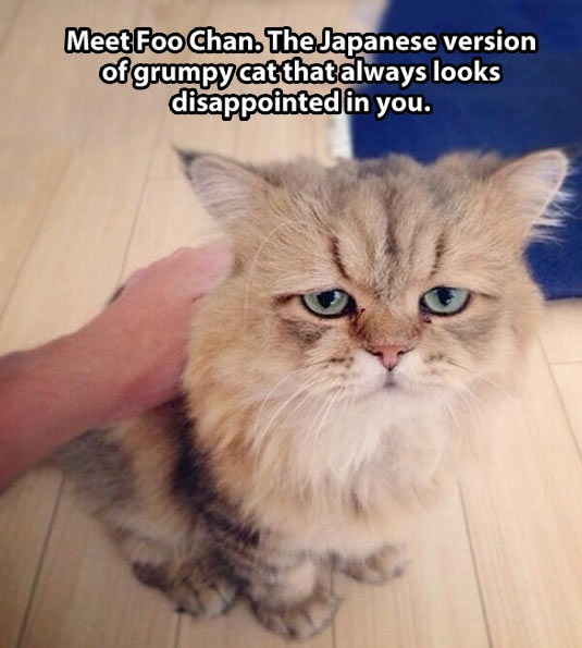 funny-pictures-foo-chan-cat-disappointed