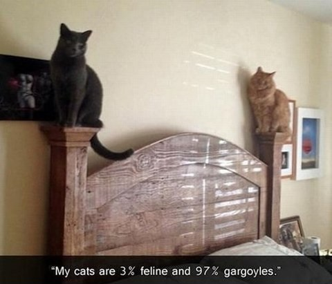 funny-pictures-gargoyle-cats