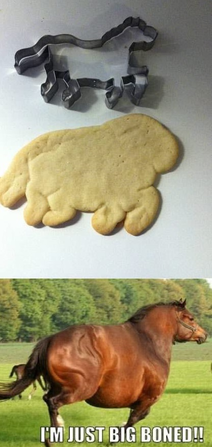 funny-pictures-horse-cookie-big-boned