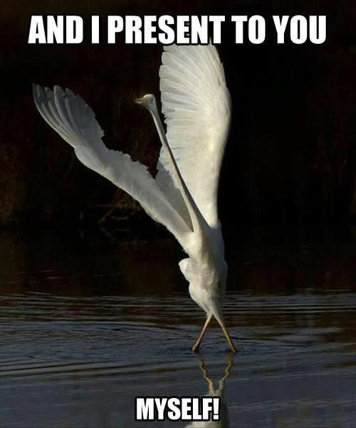 funny-pictures-magestic-bird-present-myself