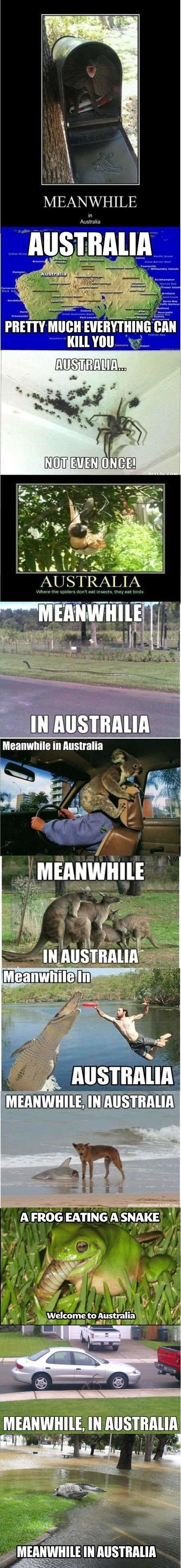 funny-pictures-meanwhie-in-australia