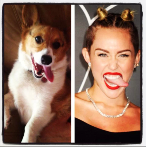funny-pictures-miley-cyrus-dog