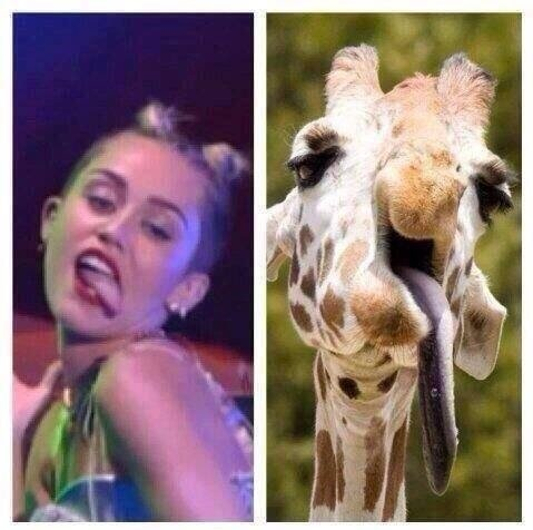 funny-pictures-miley-cyrus-giraffe