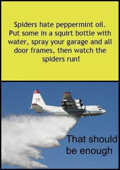 funny-pictures-peppermint-oil-spiders