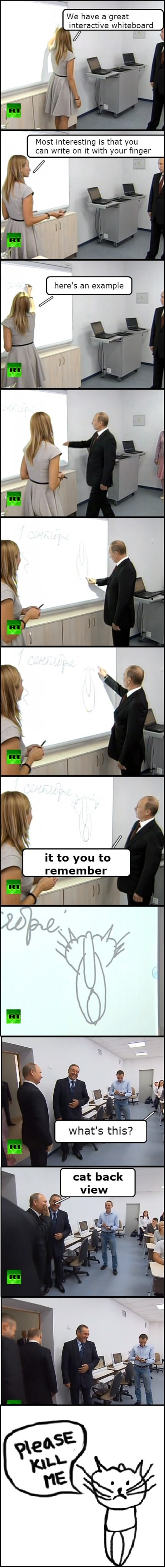 funny-pictures-putin-cat-back-view
