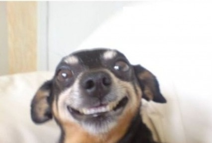 funny-pictures-smiling-dog-selfie