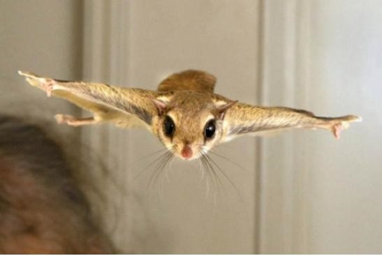 funny-pictures-squirrel-flying