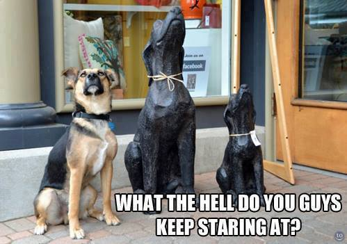 funny-pictures-staring-dogs