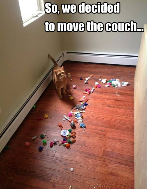 funny-pictures-trash-ander-the-couch