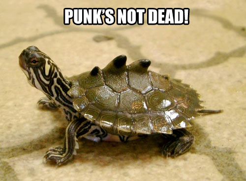 funny-pictures-turtle-punks-not-dead