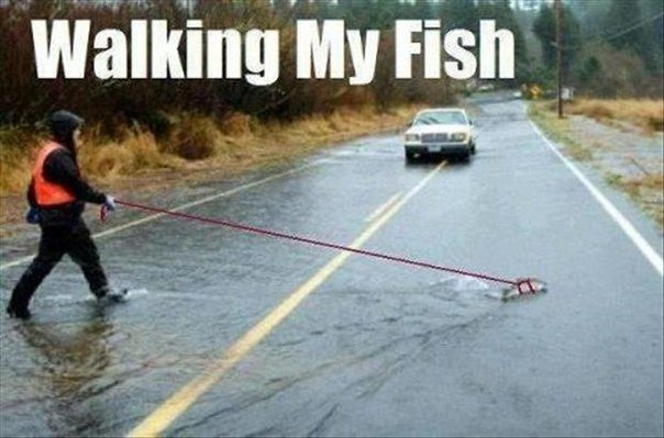 funny-pictures-walking-my-fish