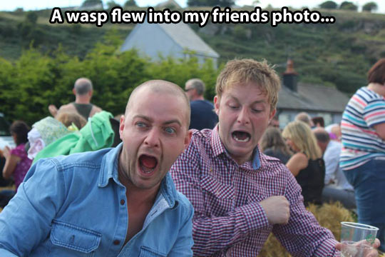 funny-pictures-wasp-flew-into-photo