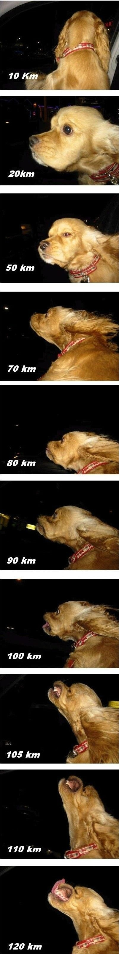 funny-pictures-wind-in-the-face-dog