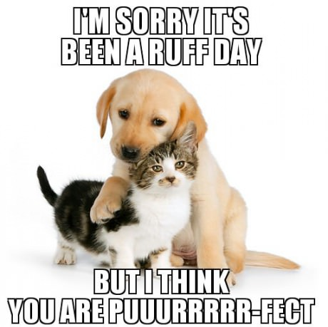 funny-pivtures-cat-dog-perfect