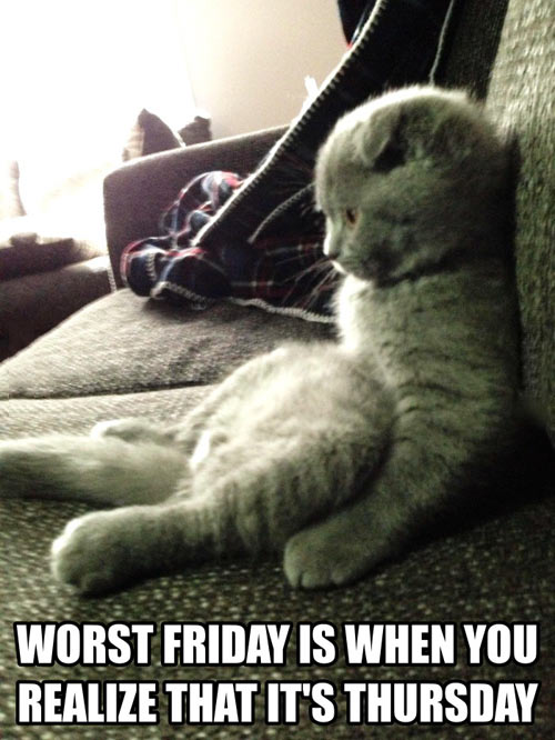 funny-cat-worst-friday-thursday