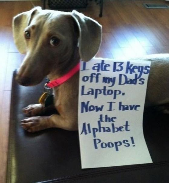 funny-picture-alphabet-poops-dog-shaming